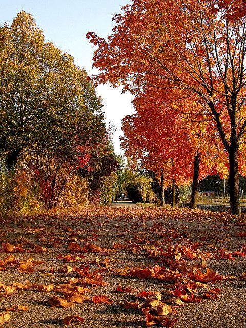 "seasonalwonderment: "" Falling Leaves """