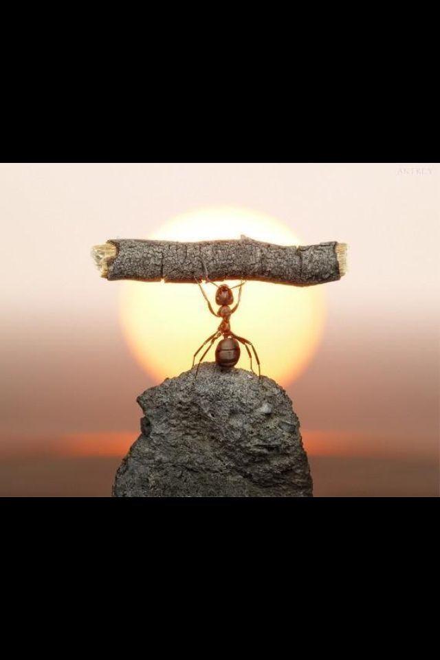 Schrijf een verhaal over deze mier. Of: wanneer was jij trots op jezelf?
