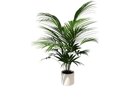 10 NON TOXIC - PET FRIENDLY plants for your home: Areca/golden palm, bamboo, christmas cactus, blue echeveria, Burro/lamb's tail, button fern, hens & chickens, pearl plant, ponytail palm, and spice orchid