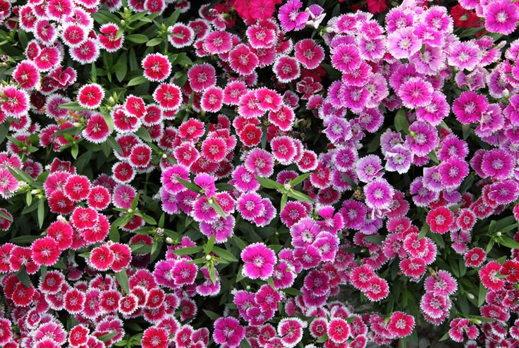 The 10 Best Perennial Flowers For Any Yard Sun Summer