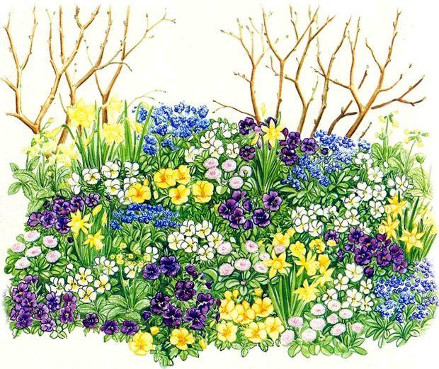 """В нашем примере использованы следующие рано зацветающие растения:  1. Мелкоцветковый нарцисс 'February Gold',  2. Незабудка лесная (Myosotis sylvatica),  3. Примула весенняя (Primula veris),  4. Маргаритка многолетняя (Bellis perennis),  5. Фиалка рогатая (Viola cornuta) белая,  6. Фиалка рогатая желтая,  7. Фиалка рогатая фиолетовая.  Нежный """"снежный"""" садик  Дизайн небольшого фрагмента сада построен на изысканном сочетании серебристого, белого и голубого цветов.  Как это ни парадоксально…"""