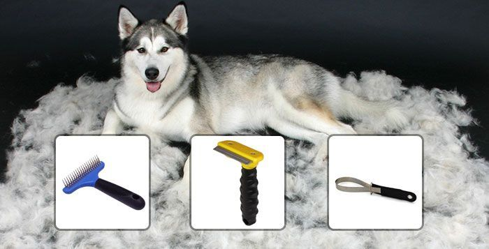 Here it is. Everything you ever wanted to know about grooming your Husky and keeping his coat looking great; brushes and brushing, bathing and shampoos, coat health, and I even have included a recipe for a solution should your Husky get sprayed by a skunk this summer. It's all contained here for you in oneRead More