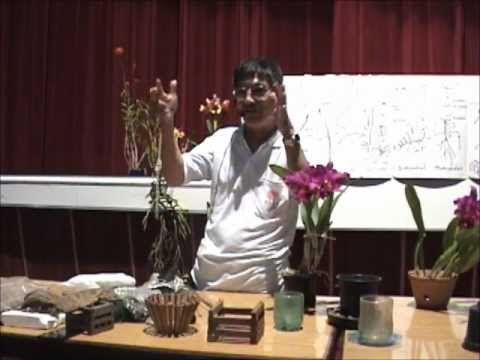 Curso básico de cultivo de Orquídeas - Parte 1