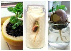 Cómo plantar semillas, un experimento infantil