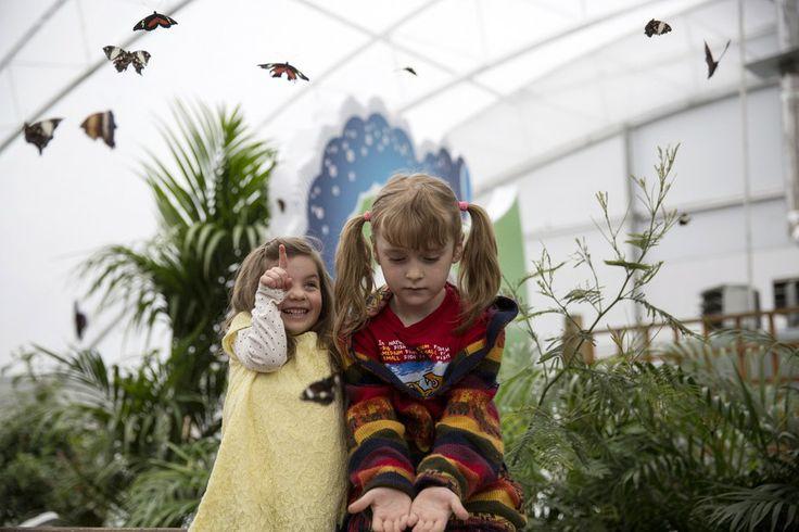 """Duas garotinhas admiram as borboletas durante a exibição """"Borboletas Sensacionais"""", no Museu de História Natural em Londres, Inglaterra - http://epoca.globo.com/tempo/fotos/2014/03/fotos-do-dia-31-de-marco-de-2014.html (Foto: Oli Scarff/Getty Images)"""