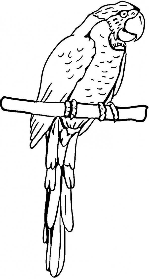 coloring page of a macaw Parrot, Pirate Parrot Coloring