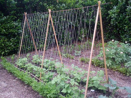 """DIY Tomato TrellisTo Build:  5 lengths of 6-foot bamboo. Crossing two pieces of bamboo, tie string about 5-inches down, creating a small """"X"""" at one end. Once tied, splay the bamboo apart, making a large """"X"""" – these will act as the foundation for the trellis. Do this twice and position the the bamboo legs about 5 feet apart in the bed. Position the remaining piece of 6-foot bamboo across the frame and voila! A super durable, strong trellis in which to trail over vining plants."""