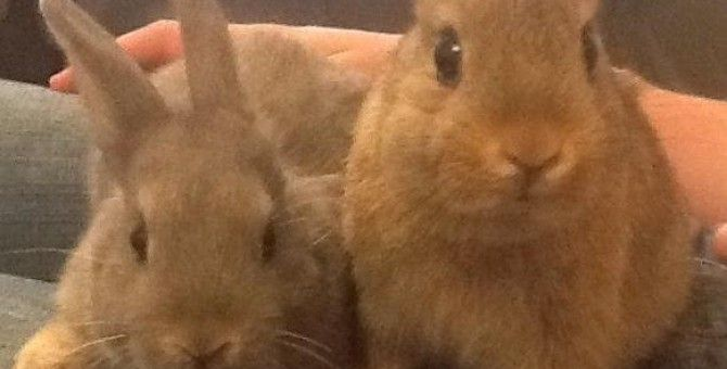 Bunny behaviour is odd