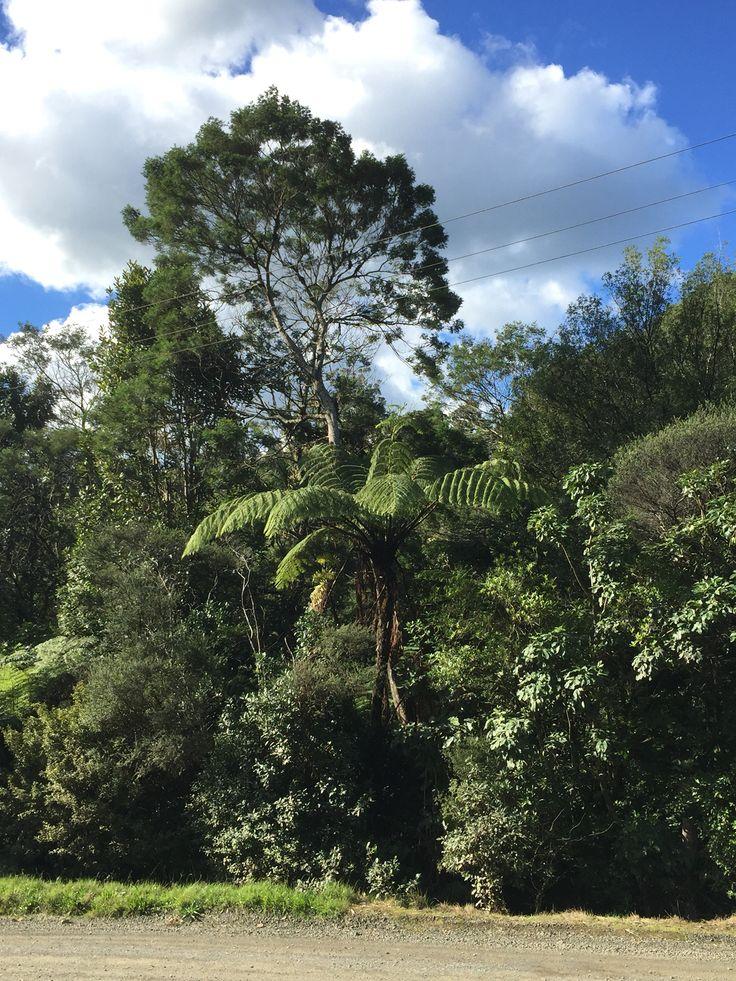 Coramandel, New Zealand