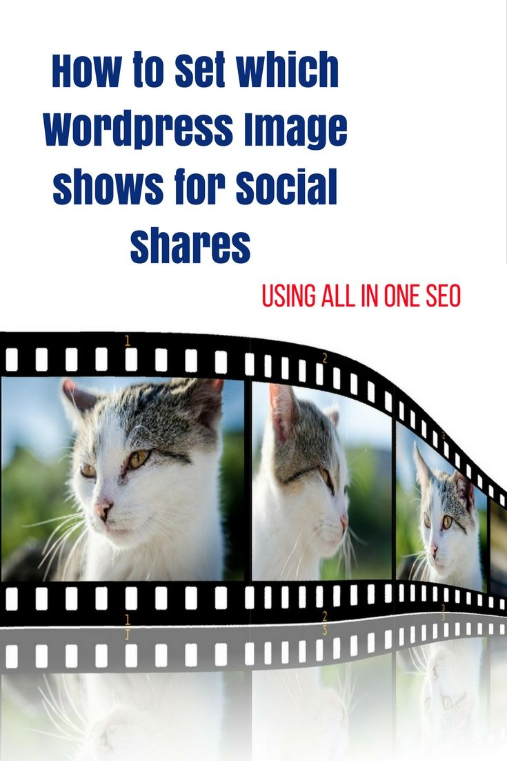 Are you struggling with your social share images? Here's how to set which Wordpress image shows up when you do your social shares using All In One SEO   #socialmedia #wordpress #allinoneseo #seo #socialmediaimage #socialshareimage #socialmediamarketing #socialmediatips #contentmarketing #smm #marketingtips #marketingstrategy #digitalmarketing #onlinemarketing #wordpresstutorial #socialmediastrategy #marketingonline #marketing101 #inboundmarketing #marketingdigital #marketing #smtips…