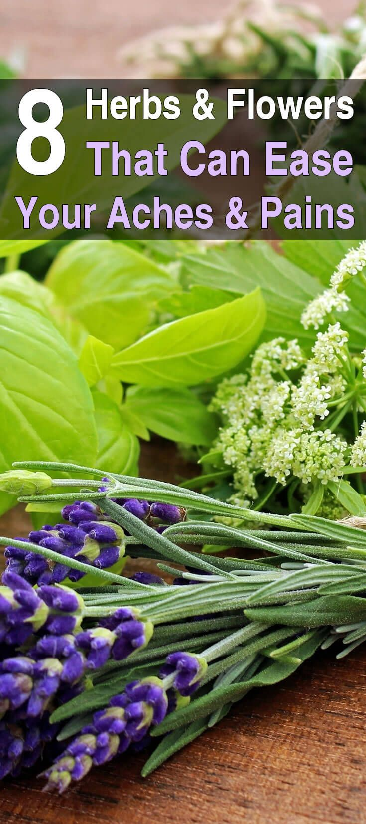 Nature has provided medicinal plants that ease pain, relieve migraines, clear up rashes, reduce swelling and bruising, and treating various illnesses.