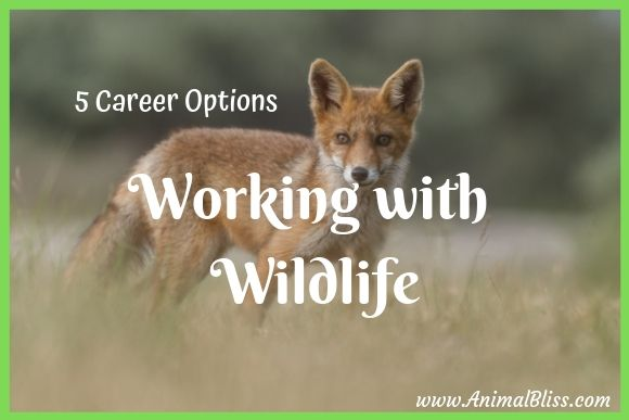 5 Career Options For Working With Wildlife Jobs With Animals Wildlife Wildlife Rehabilitation