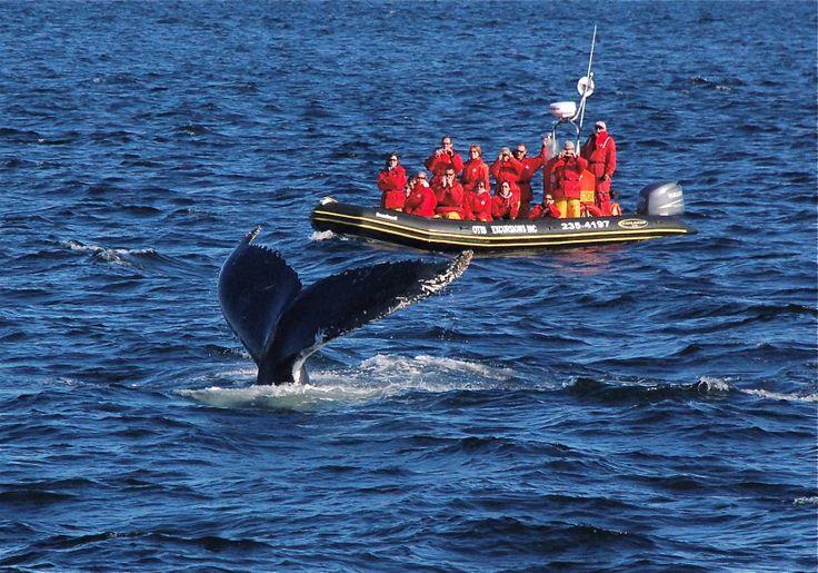 Faune - Baleines à Tadoussac