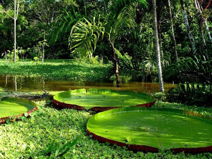 Amazon south america nature greenliving http www for Most beautiful places in america nature
