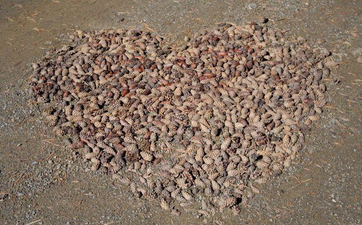 Lepaan miljöö: Joku oli asetellut kävyt sydämen muotoon - Lepaa gardens: Cones in a shape of heart. We love it!