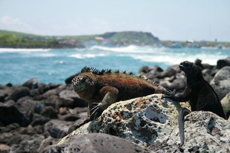 Les îles enchantées, Galápagos © Maxime Jean