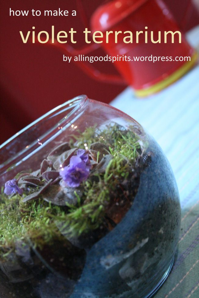 How to make a violet terrarium