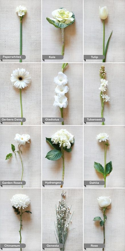 80 best flower colors types images on pinterest planting flowers different white flower arrangements for tables maybe 3 or 4 total arrangment choices mightylinksfo