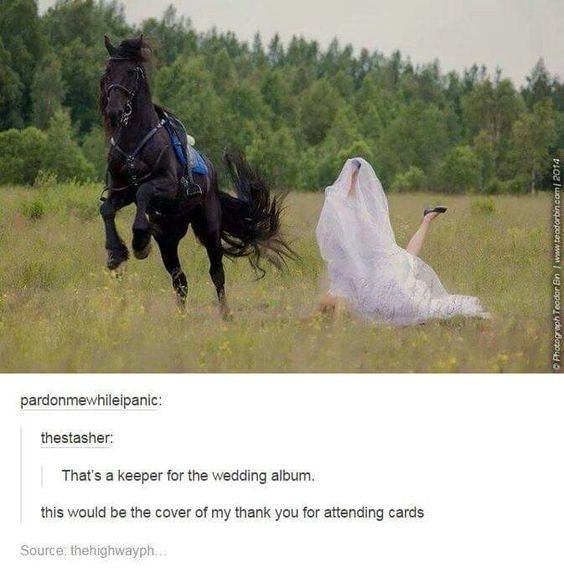 10 Truly Funny Tumblr Posts About Horses You Must Read Today