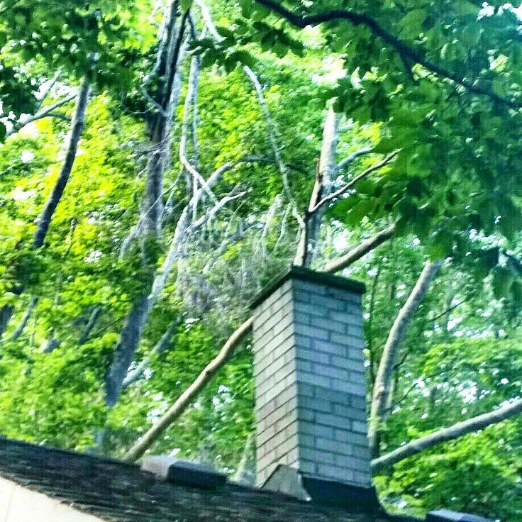 Limbs over your chimney can cause fire hazardous limbs can potentially cause harm to people or property 647-545-8733