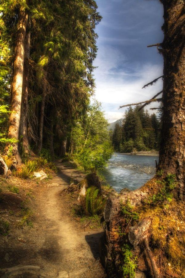 Hoh River Trail, Olympic National Park, Washington.