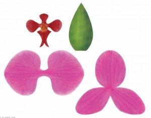 Blog Luana Alves Artesanato em EVA: Quem não conhece frisadores e para que serve. Essas são diferentes tipos de Orquideas!!!