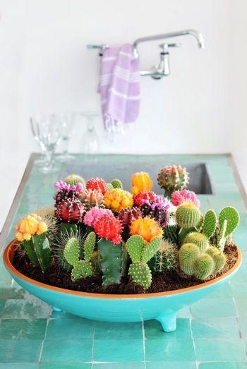 カラフルな帽子をかぶったようなサボテン。サボテンの花には「枯れない愛」という花言葉もあるようで、ウェディングのギフトとしても喜ばれています。