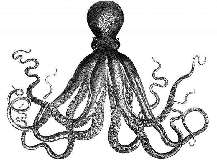 Vintage Clip Art Image - Wonderful Octopus or Cuttle-fish - The Graphics Fairy