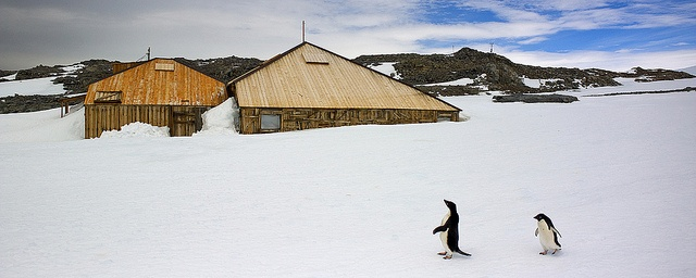 Orion Expedition Cruises at Mawsons Huts, Antarctica