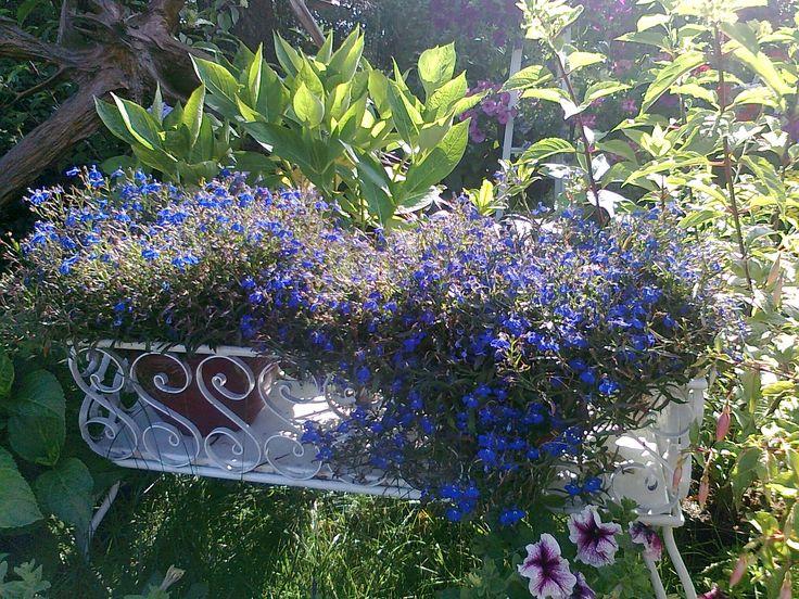 Fialové květiny v bílém truhlíku