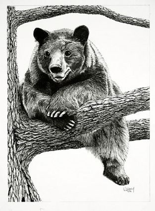 Pencil Drawings of Bears | Black Bear Pencil Drawings