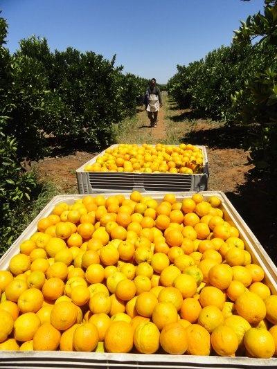 Waikerie produce, South Australia.  Re-pinned via Sophia Buddenhagen.