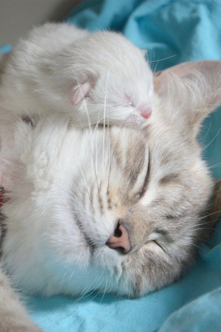 Cute Kittens For Sale Uk Cute Cats Drawings Kittens Cutest Cute Animals Cute Cats