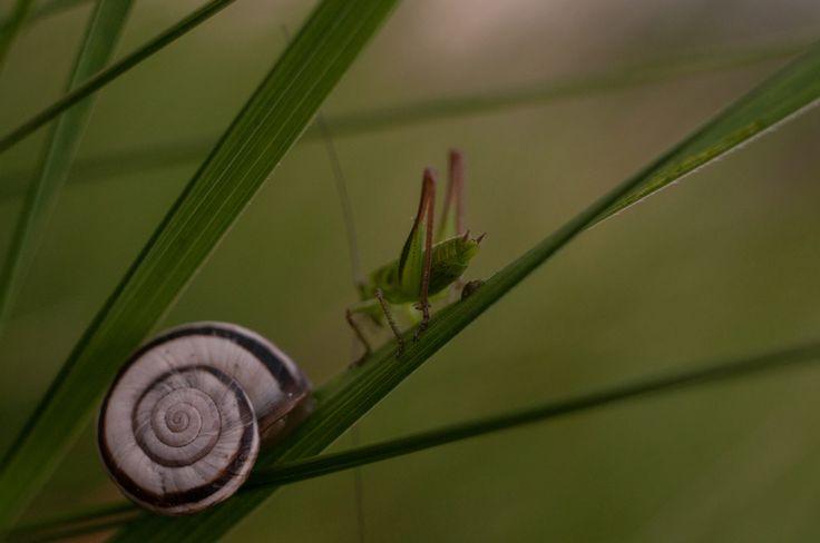 ***CLICK IMAGE*** meeting by Bodó Miklós #naturephotography #photography