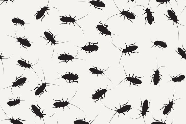 how to get rid of palmetto bugs in florida