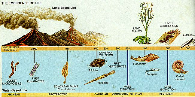 Life from the Precambrian through the mid-Paleozoic.