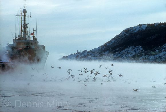 St. John's Newfoundland in Winter   The Narrows in Winter, St. John's, Newfoundland, Canada
