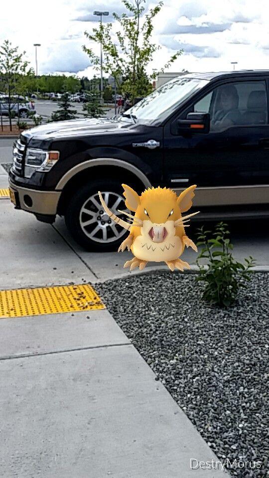 Raticate was defending the crosswalk! #GottaCatchEmAll #PokemonGo