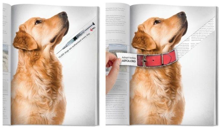 CRESCENDO :: [포스트 광고]ASPCA(미국동물애호협회) 잡지광고 (Jenny)