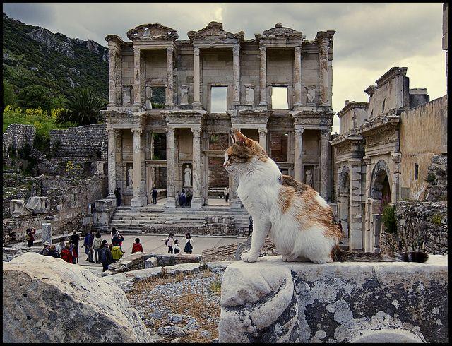 The Library of Celsus, Ephesus + cat-----Still portrait; very very very still.