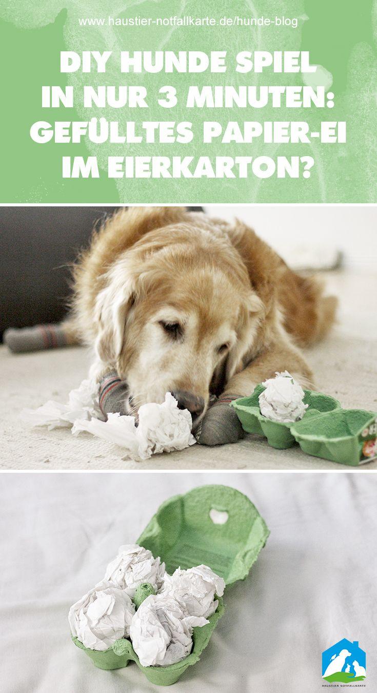 Juego de perros de bricolaje: huevos de papel relleno en cartón de huevos   – Hund