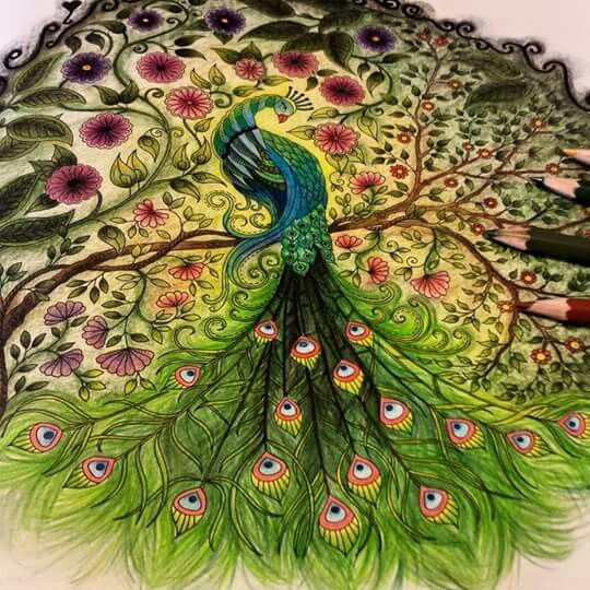 .adult coloring | peacock ♥.