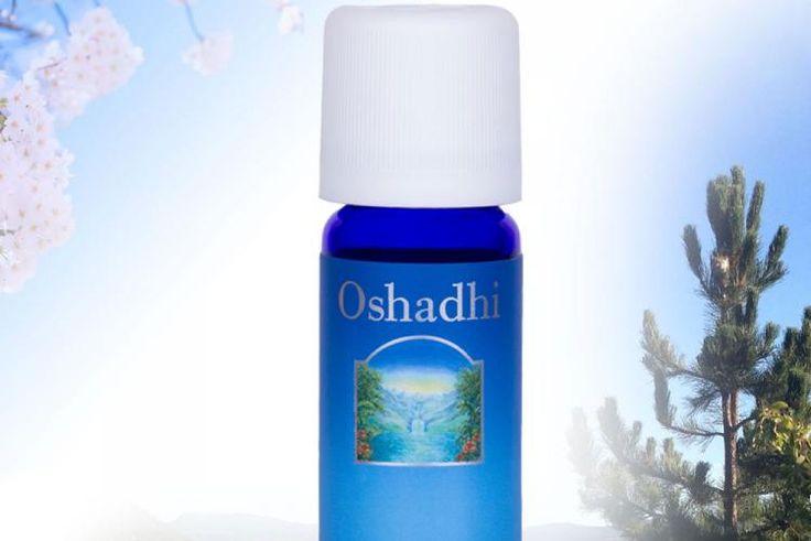 Oshadhi Singapore, essential oil
