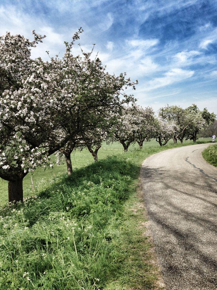 Tricht (Gelderland) - Appeldijk #bedandbreakfast #bijdeboomgaard #www.bijdeboomgaard.nl