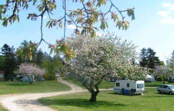 Deze zomer op deze camping in Denemarken, zin in! De camping is een oude boomgaard met 80 oude fruitbomen.