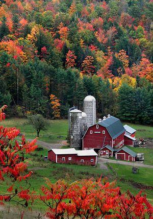 Autumn foliage near a farm outside of  Peacham, Vermont.  Photo: John Baker   ..rh