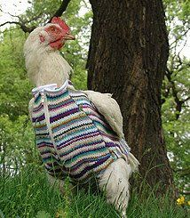 49 best Chicken sweaters images on Pinterest