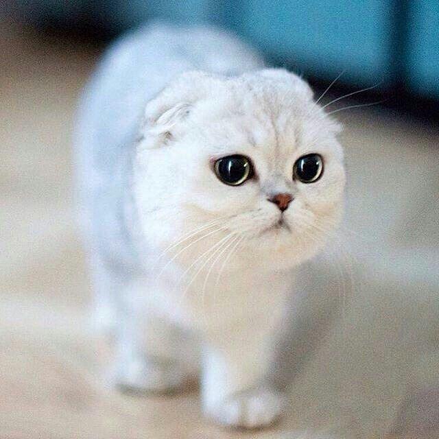 #catstagram #gato #cat #instapets #catsofinstagram #catlover #instacats #happy #catlife #textgram #sexycurve #kitty #pose #lifestyle