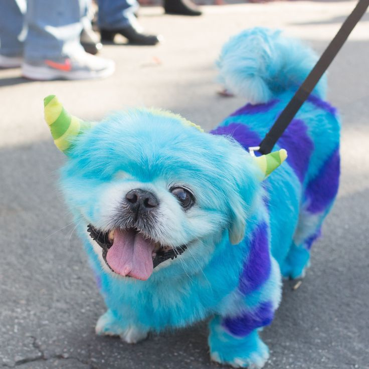 """Veterinarian tested and long-lasting colored hair spray for your pet. Pet paint is the perfect colored dye for your dog, cat, horse, and any other pet with a coat! Dress up your furry friend for holidays, parades, birthdays and more! Decorate """"Buddy"""" like Oscar the Grouch this Halloween, or get creative decorating him a way you heart desires. This non-toxic and professional quality pet hair dye make the best pet costumes and is the best alternative to custom clothing for you pet. Available…"""