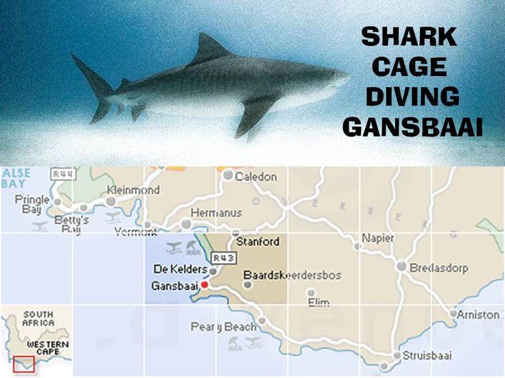 Experience shark cage diving in Gansbaai #sharkcagediving